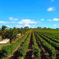 Vineyards near Extremoz